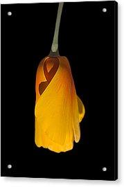 Lone Poppy Acrylic Print by Clyde Replogle
