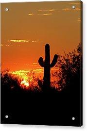 Lone Saguaro Sunrise Acrylic Print