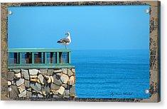 Lone Sea Gull Acrylic Print by Doreen Whitelock