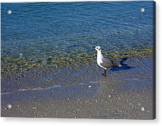 Lone Seagull At Miramar Beach In Naples Acrylic Print