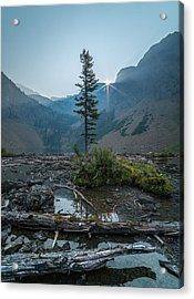 Lone Survivor // Bob Marshall Wilderness  Acrylic Print