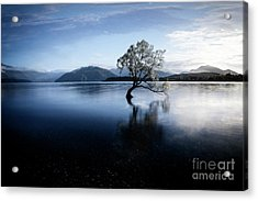 Acrylic Print featuring the photograph Lone Tree 2 by Scott Kemper