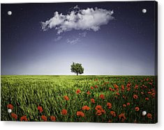 Lone Tree A Poppies Field Acrylic Print by Bess Hamiti
