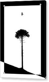Lone Tree Acrylic Print by Adam Smith