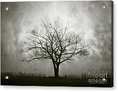 Lone Tree And Clouds Acrylic Print by Dave Gordon