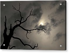 Acrylic Print featuring the photograph Lone Tree And Sun Toned by David Gordon