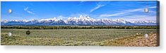 Lone Tree And The Tetons Acrylic Print