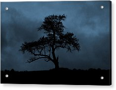 Lone Tree Blue Acrylic Print