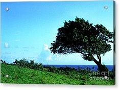 Lone Tree Blue Sea Acrylic Print by Thomas R Fletcher