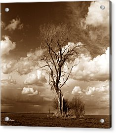 Lone Tree- Brown Tone Acrylic Print