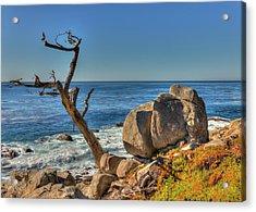 Lone Tree California Coast Acrylic Print by James Hammond