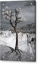 Lone Tree Canyon Acrylic Print by Mike Irwin