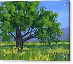 Lone Tree Acrylic Print by David King