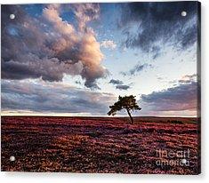 Lone Tree Egton Moor Acrylic Print by Janet Burdon
