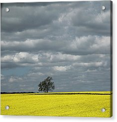 Acrylic Print featuring the photograph Lone Tree by Elvira Butler