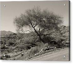 Lone Tree Acrylic Print by Gordon Beck