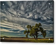 Lone Tree In Field Acrylic Print