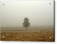 Lone Tree In Fog Acrylic Print