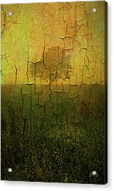 Lone Tree In Meadow -textured Acrylic Print by Dave Gordon