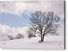 Lone Tree In Snow Acrylic Print