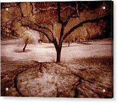 Lone Tree Acrylic Print by Michael Cleere