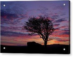 Lone Tree Near Holwell Tor On Dartmoor Acrylic Print