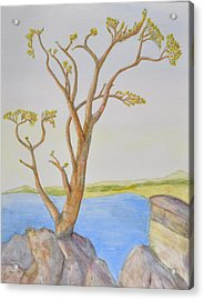 Lone Tree On The Ocean Acrylic Print by Jonathan Galente