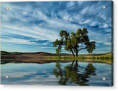Lone Tree Pond Reflection Acrylic Print