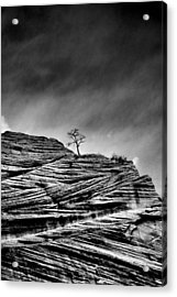 Lone Tree Rid Acrylic Print by Sarah-jane Laubscher