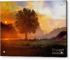 Lone Tree Acrylic Print by Robert Foster