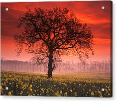 Lone Tree Sunrise Acrylic Print by John Perriment