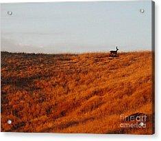 Lone Wanderer Acrylic Print