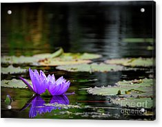 Lone Water Lilly Acrylic Print