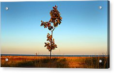 Acrylic Print featuring the photograph Loneliness by Milena Ilieva