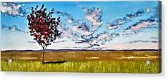 Lonely Autumn Tree Acrylic Print