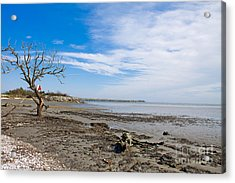 Acrylic Print featuring the photograph Lonely Beach At Christmas by Sandy Adams