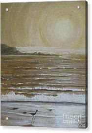 Lonely Beach Sunrise Acrylic Print by Dana Carroll