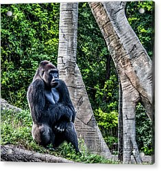 Lonely Gorilla Acrylic Print by Joann Copeland-Paul