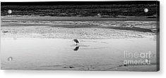 Acrylic Print featuring the photograph Lonely Heron by Nicholas Burningham