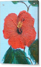 lonely Hibiscus  Acrylic Print by Francis Roberts ll