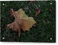 Lonely Leaf Acrylic Print