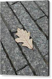 Lonely Leaf Acrylic Print