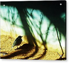 Acrylic Print featuring the photograph Lonely Little Bird by Shawna Rowe
