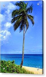 Lonely Palm Tree Los Tubos Beach Acrylic Print by Thomas R Fletcher
