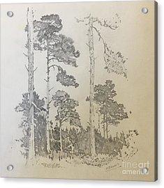 Lonely Pines Acrylic Print