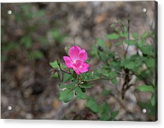 Lonely Pink Flower Acrylic Print
