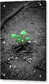 Lonely Plant Acrylic Print