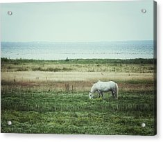 Acrylic Print featuring the photograph Lonely Pony by Karen Stahlros