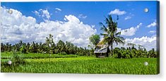 Acrylic Print featuring the photograph Lonely Rice Hut by T Brian Jones