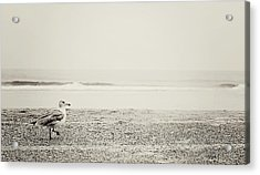 Lonely Seagull Acrylic Print by Rebecca Robinson